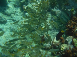 Molasses Reef, Key Largo