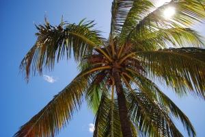 Palm tree, Miami Beach
