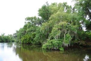Bayou, Louisiana