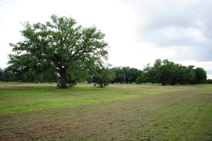 Meadow, City Park, New Orleans