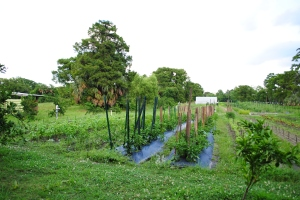 Vegetable garden, City Park, New Orleans