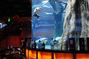 Big Catfish inside aquarium at The Lookout, Pyramid, Memphis