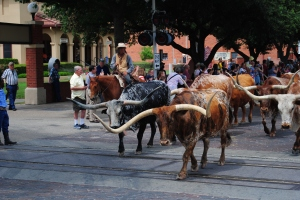 Fort Worth Longhorn Cattle Drive, Stockyards, Fort Worth