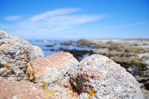 17-mile Drive, Pebble Beach, California